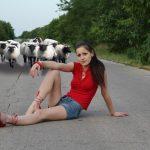 Die Invasion der Schafe